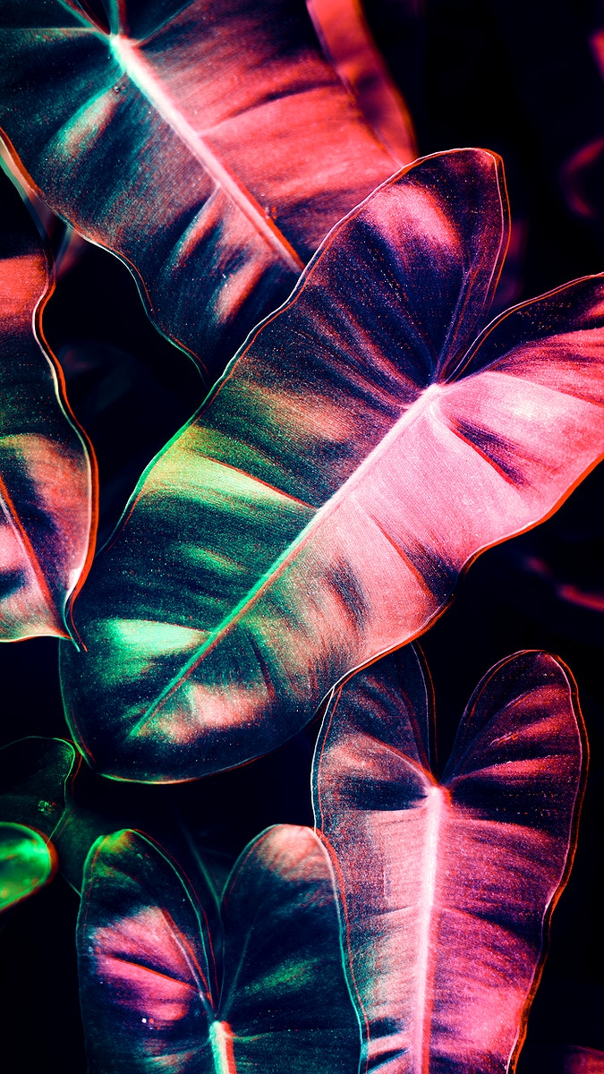 Anthurium leaves mobile screen wallpaper