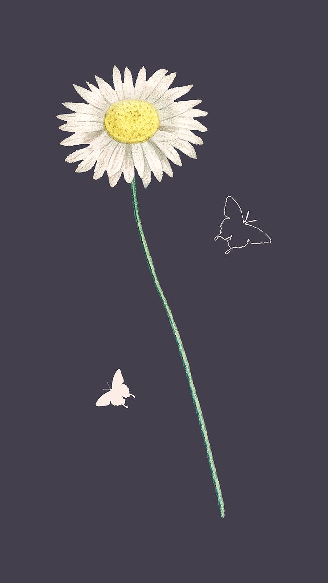 Daisy and butterflies in the night vector