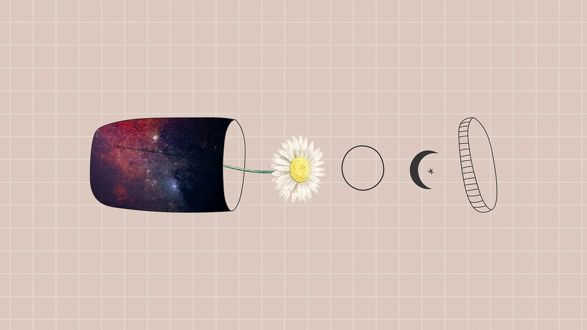 Daisy in a container on a black background vector