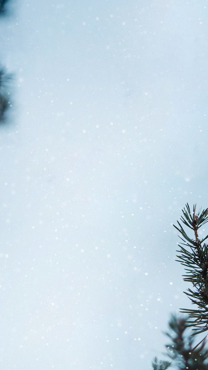 Pine branches in a snowy day background