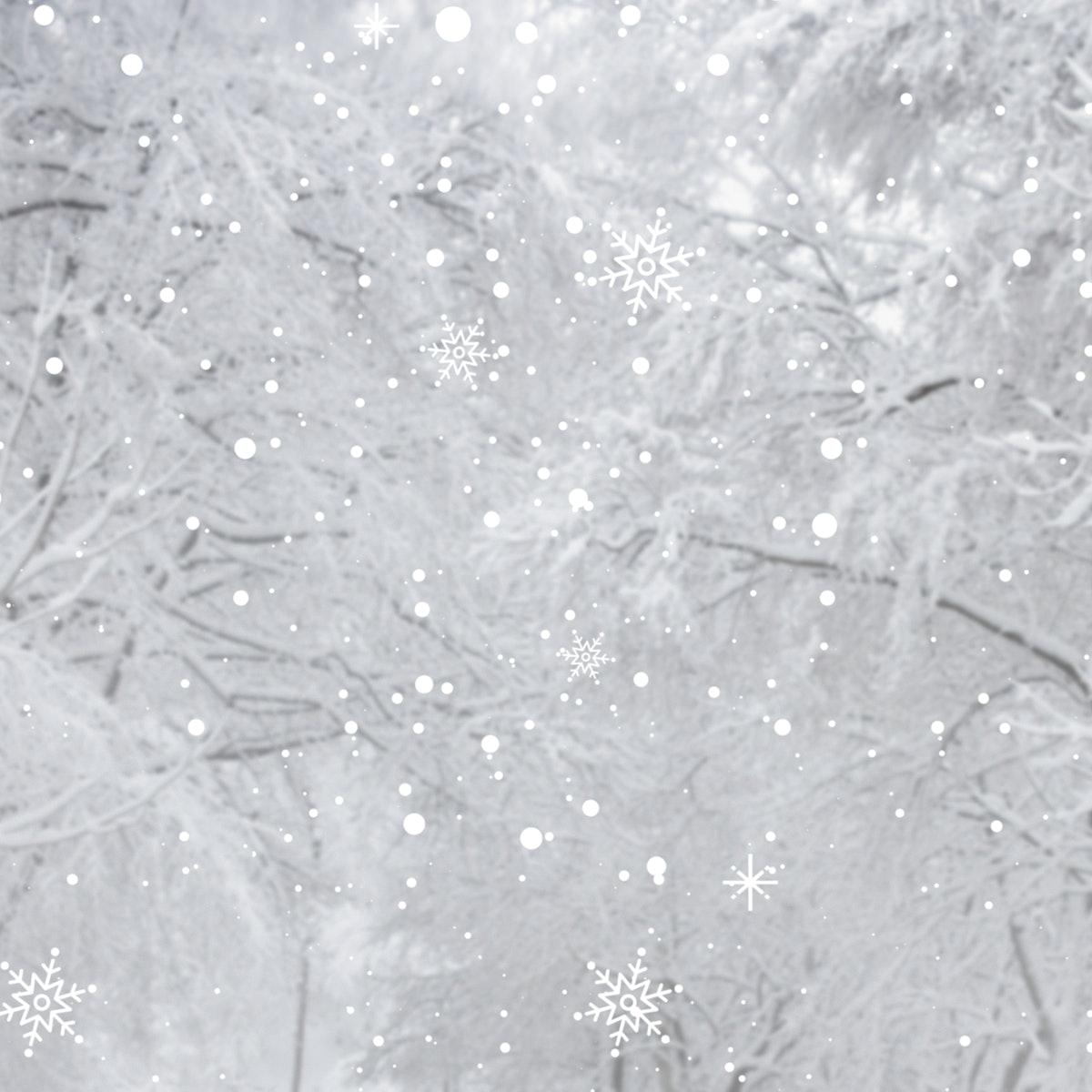 White snowy pine branch background