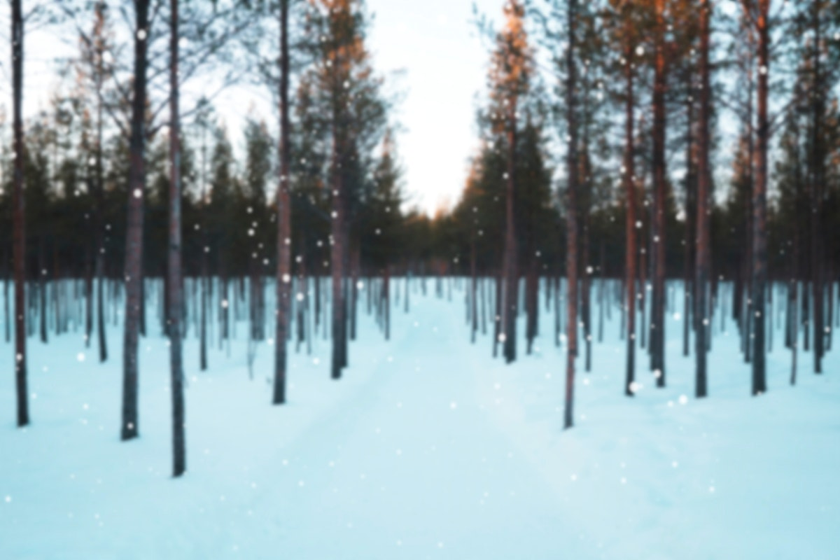 Forest on a snowy day
