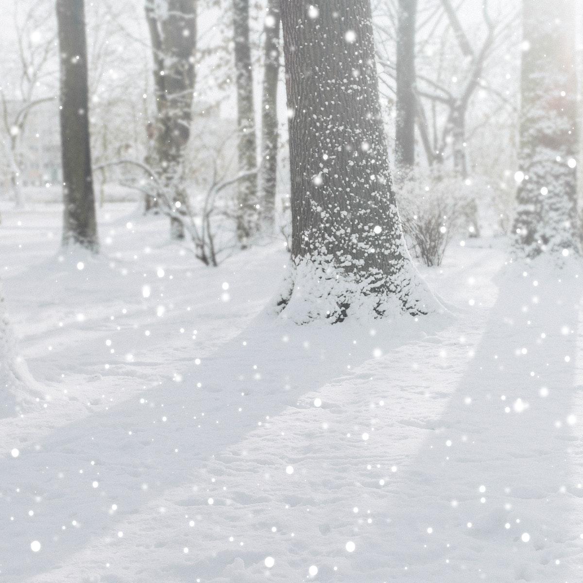 Sunbeam through the snowy forest
