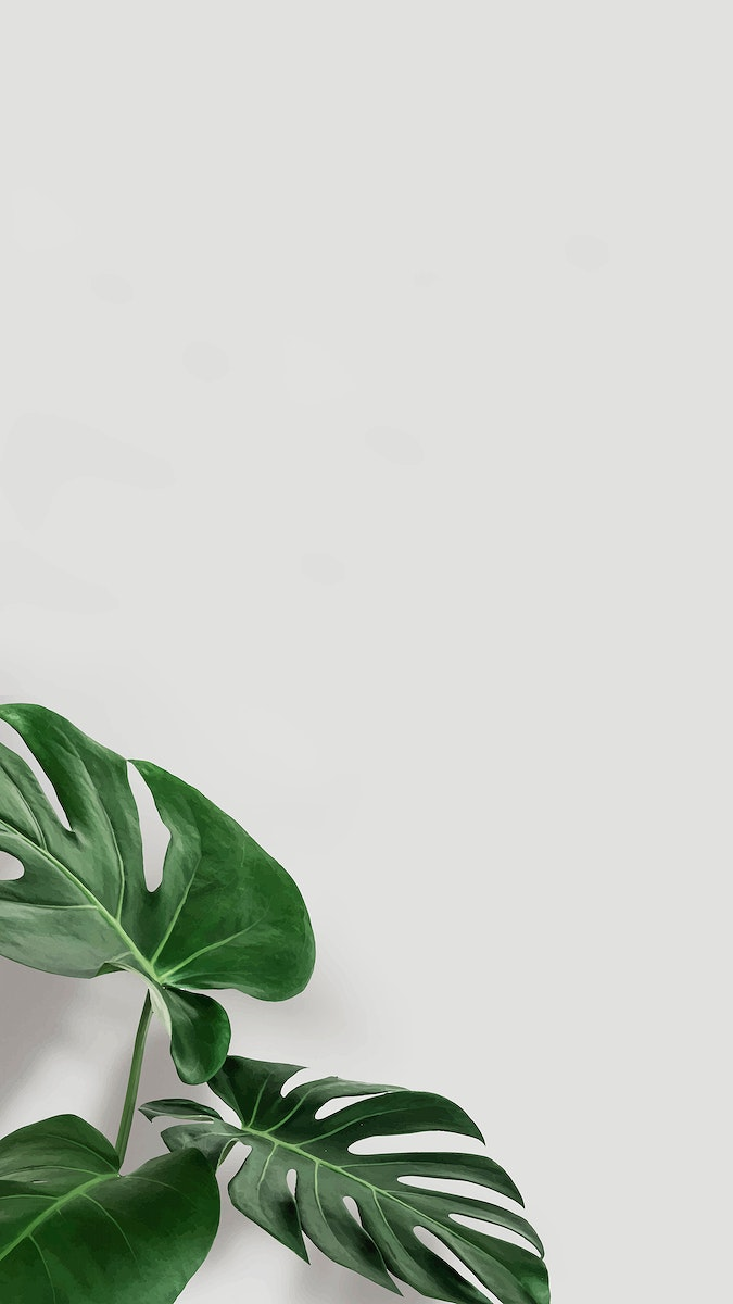 Green monstera leaves with copy space vector