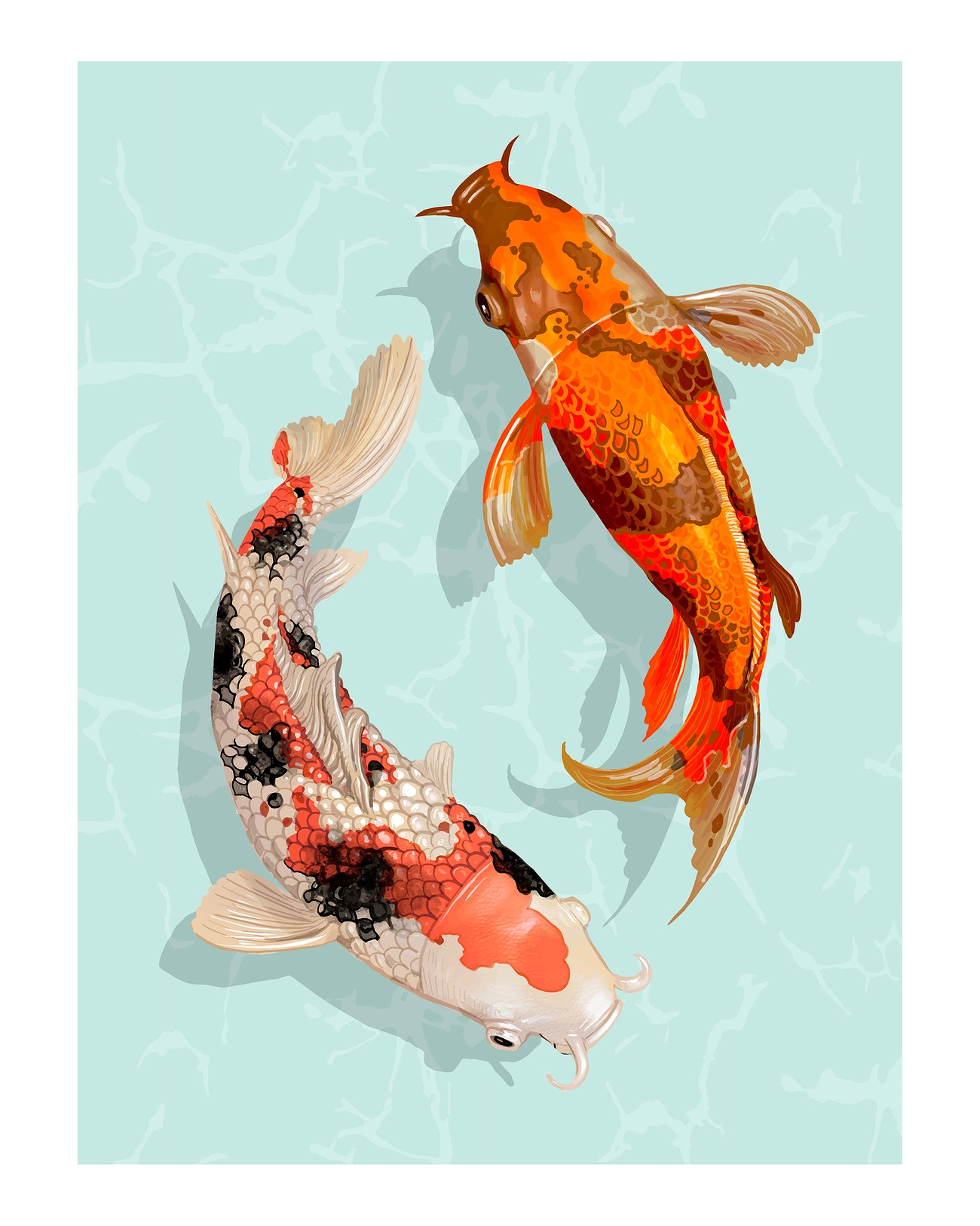 Two Japanese Koi Fish Swimming Illustration Wall Art Print And Poster Royalty Free Illustration 2267412