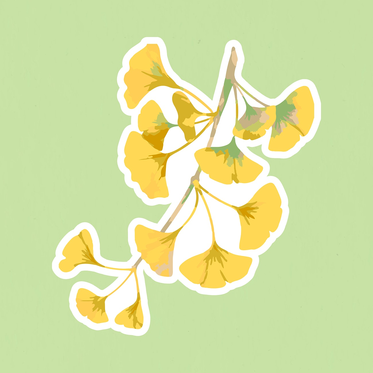 vectorized branch of yellow ginkgo sticker with a white