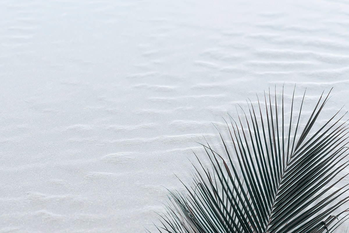 Tropical palm leaf on a sand textured background