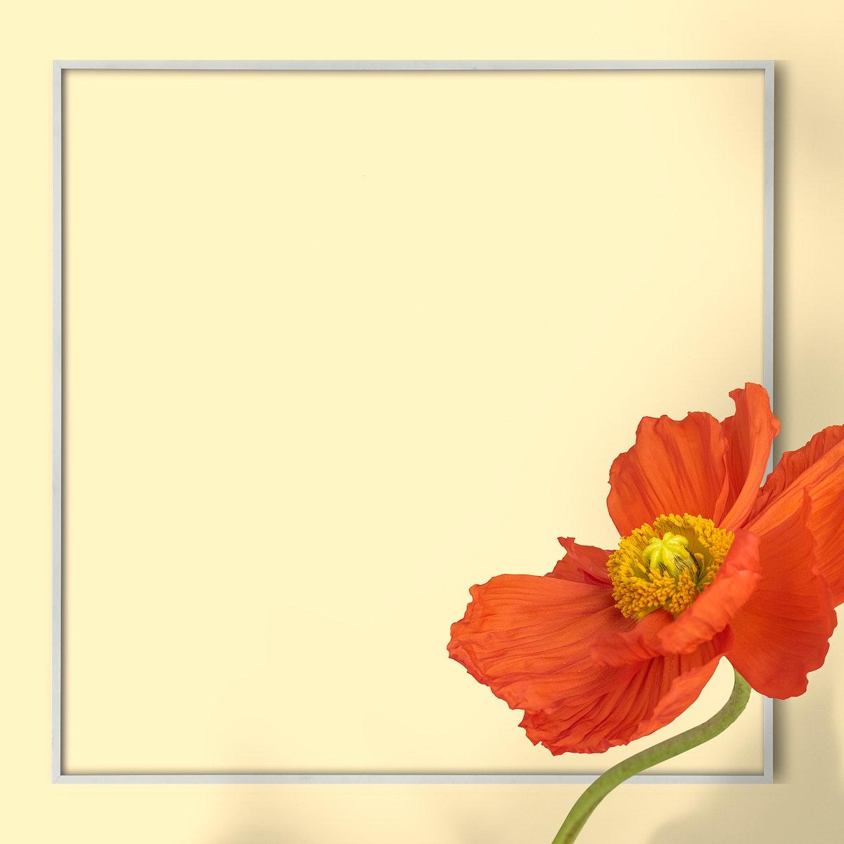 Red poppy flower frame on beige background