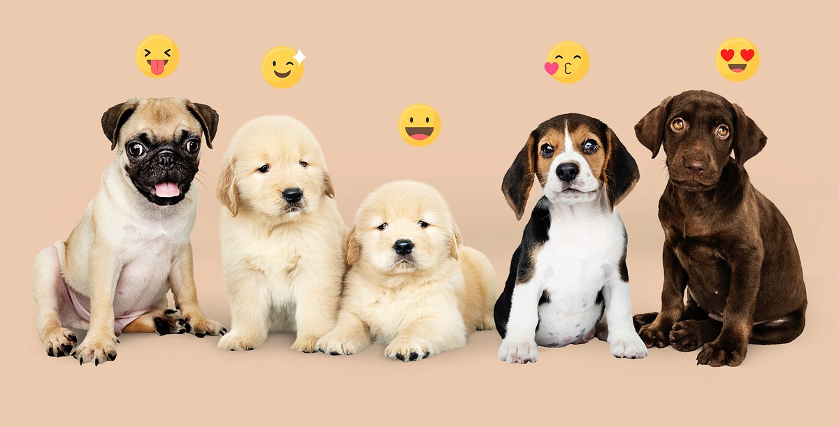 Five adorable puppies with emoticons