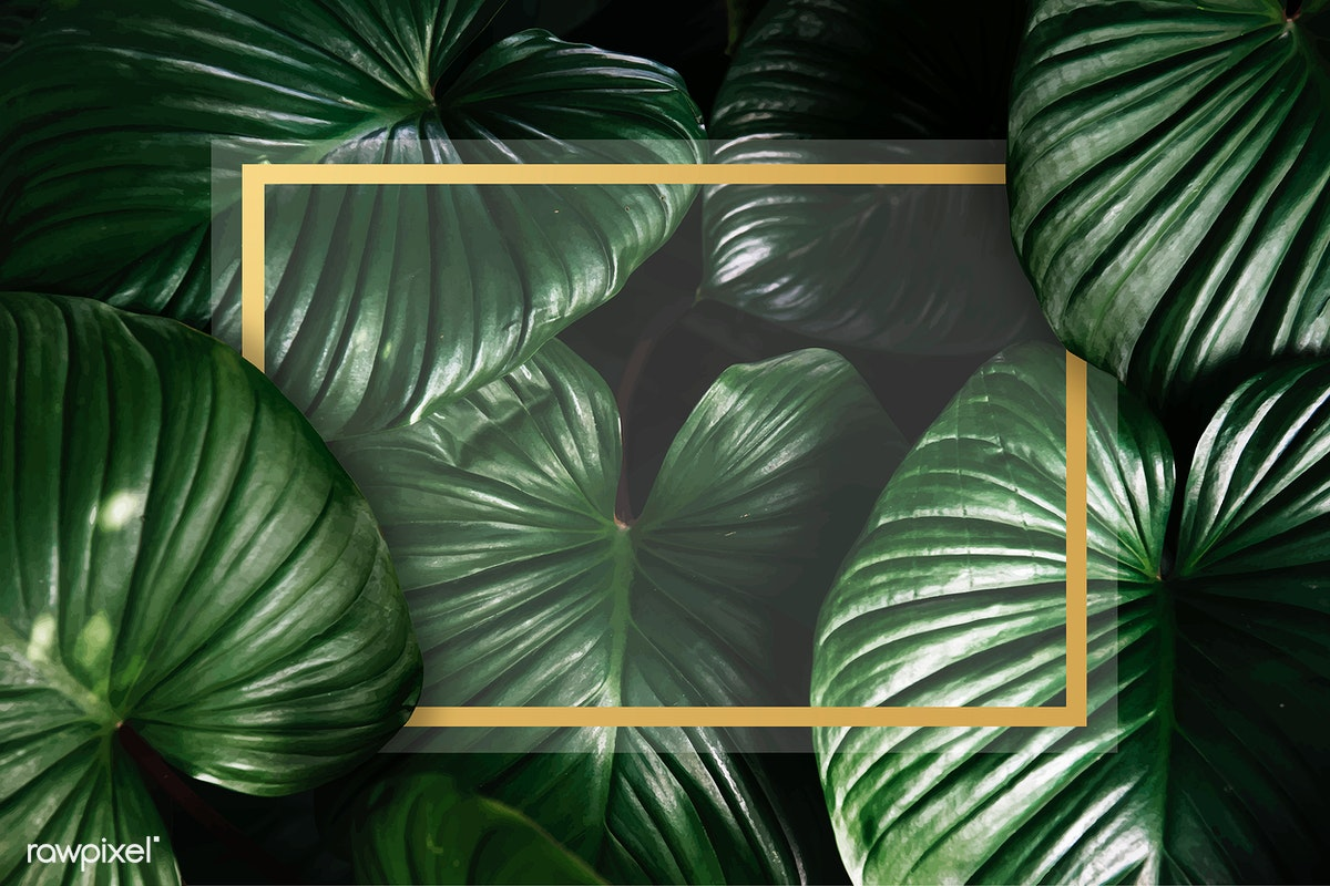 Green Tropical Background Free Stock Vector 599759