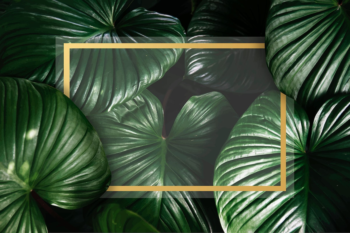 Green Tropical Background Awesome tropical background vector, download vector. green tropical background