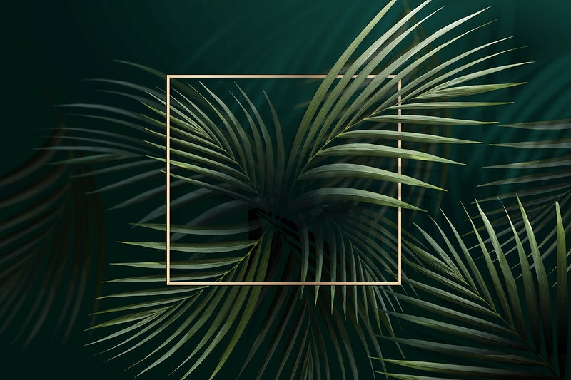 Tropical Images Free Vectors Pngs Mockups Backgrounds Rawpixel Download beautiful, curated free backgrounds on unsplash. tropical images free vectors pngs