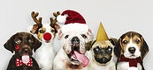 Group of puppies wearing Christmas costumes to celebrate Christmas