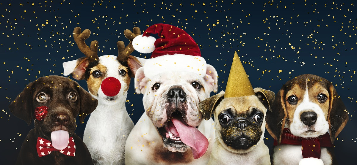 Group of puppies wearing Christmas costumes