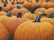 "Macro shot of a pumpkin patch.. Original public domain image from <a href=""https://commons.wikimedia.org/wiki/File:Large_pumpkins_in_field_(Unsplash).jpg"" target=""_blank"" rel=""noopener noreferrer nofollow"">Wikimedia Commons</a>"