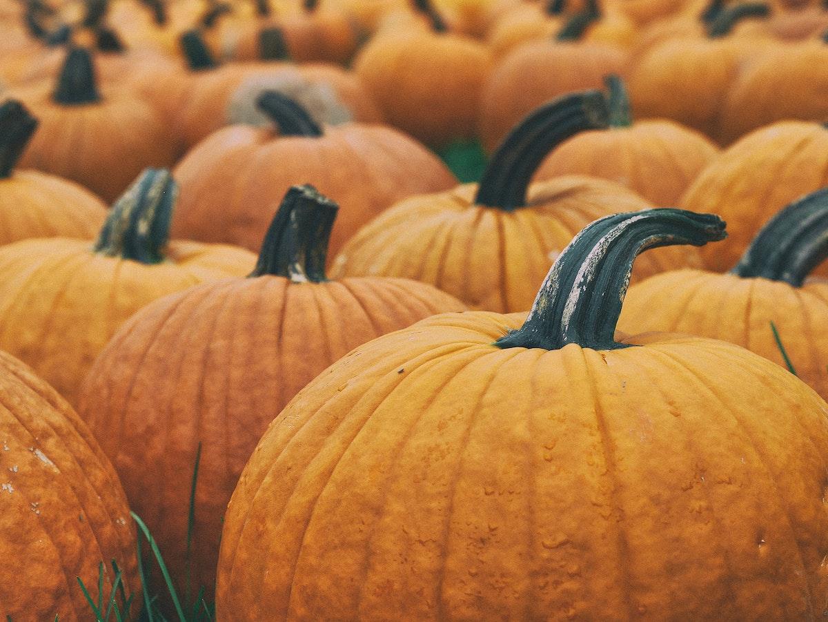 Macro shot of a pumpkin patch.. Original public domain image from Wikimedia Commons