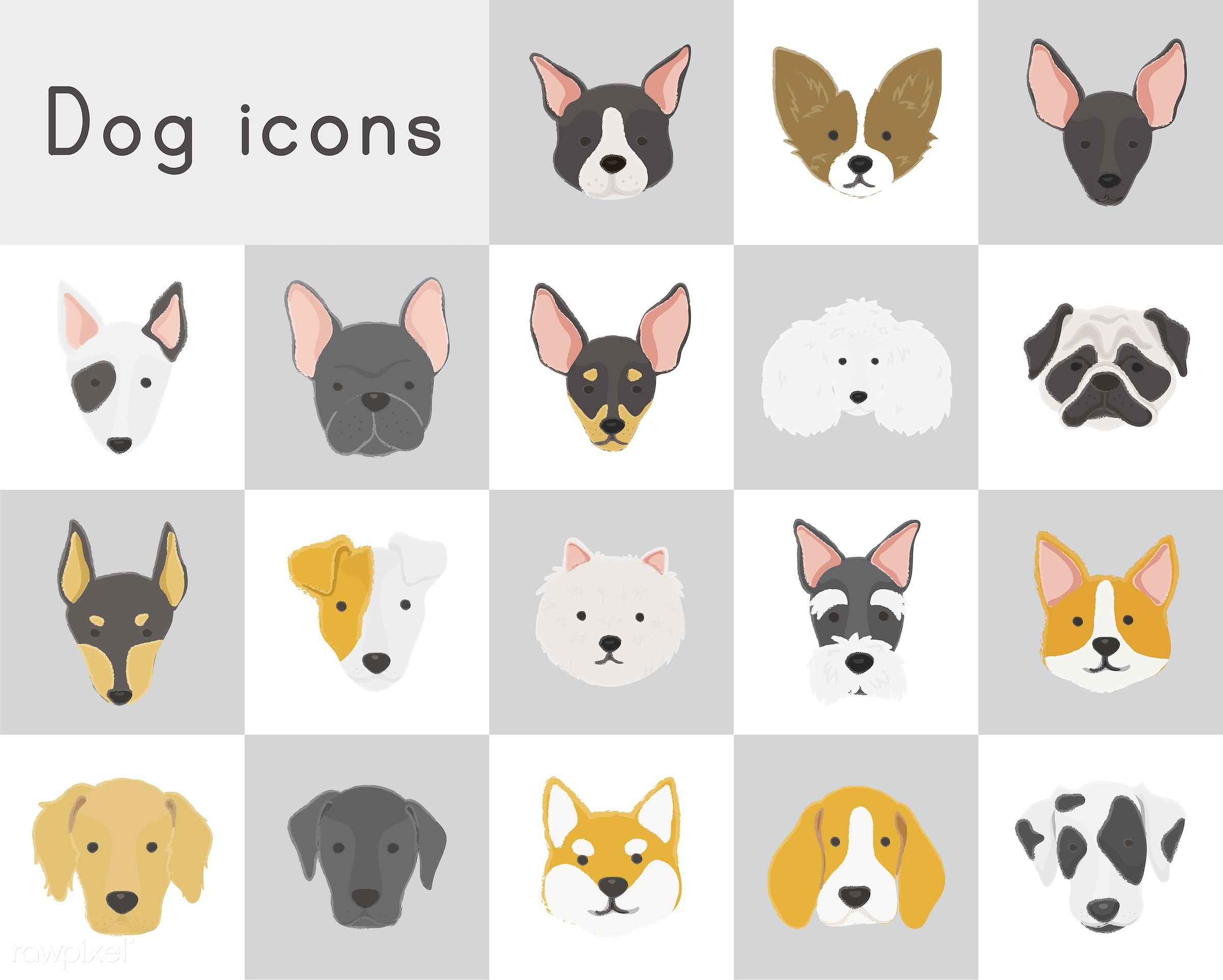 boston terrier, terrier, chihuahua, poodle, pembroke corgi, corgi, american eskimo, russell terrier, beagle, shiba inu,...