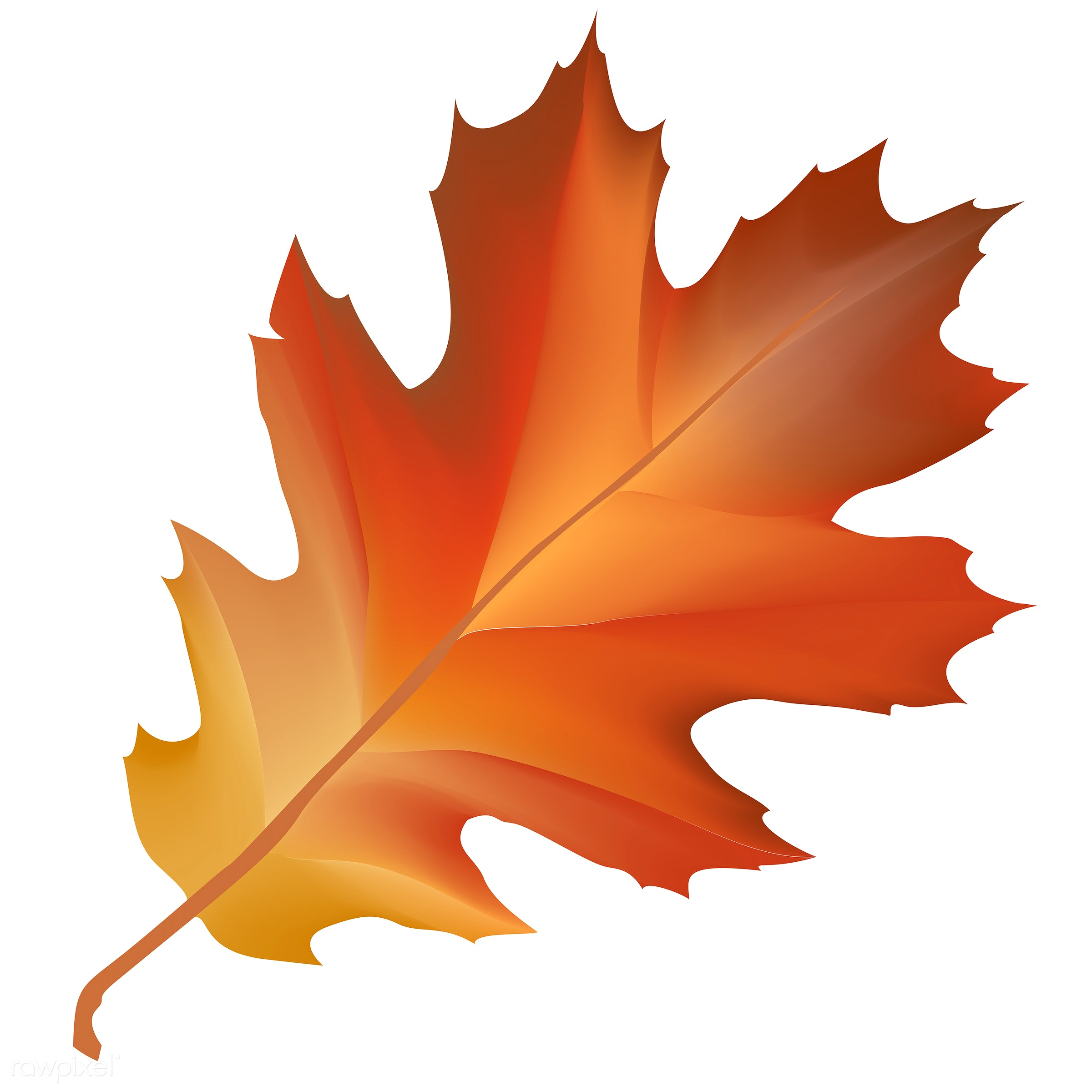 Illustration of leaf isolated on white background - autumn, celebration, crops, elements, fall, festival, graphic, harvest,...