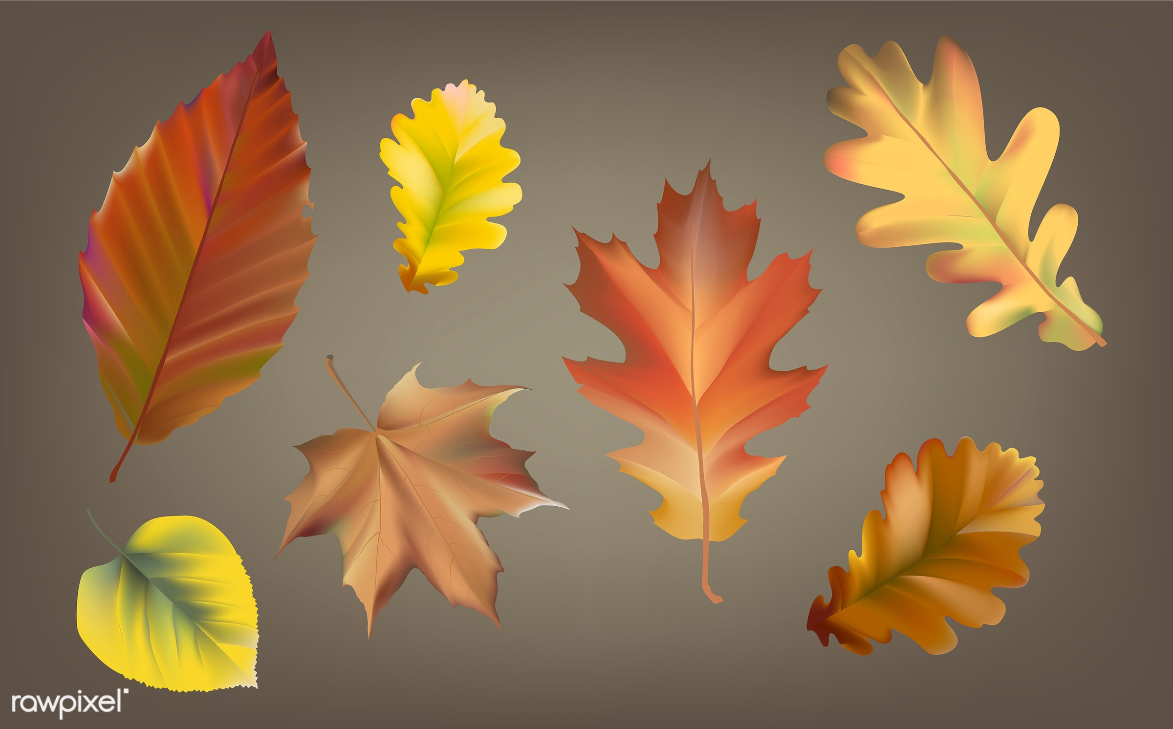 Collection of autumn leaves vector - autumn, fall, leaves, leaf, vector, illustration, graphic, collection, set, orange,...