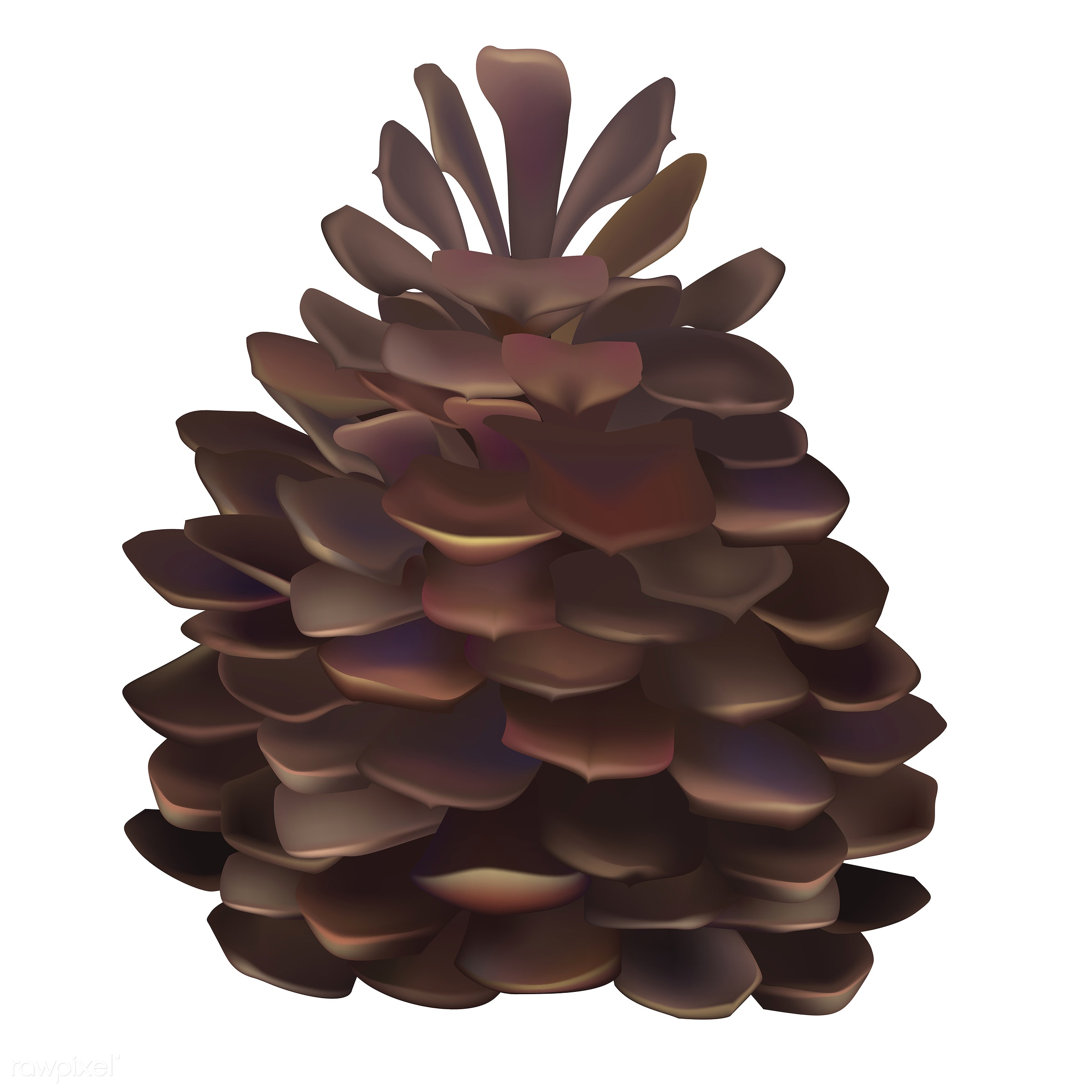 Illustration of pinecone isolated on white background - autumn, celebration, conifer cone, crops, elements, fall, festival,...