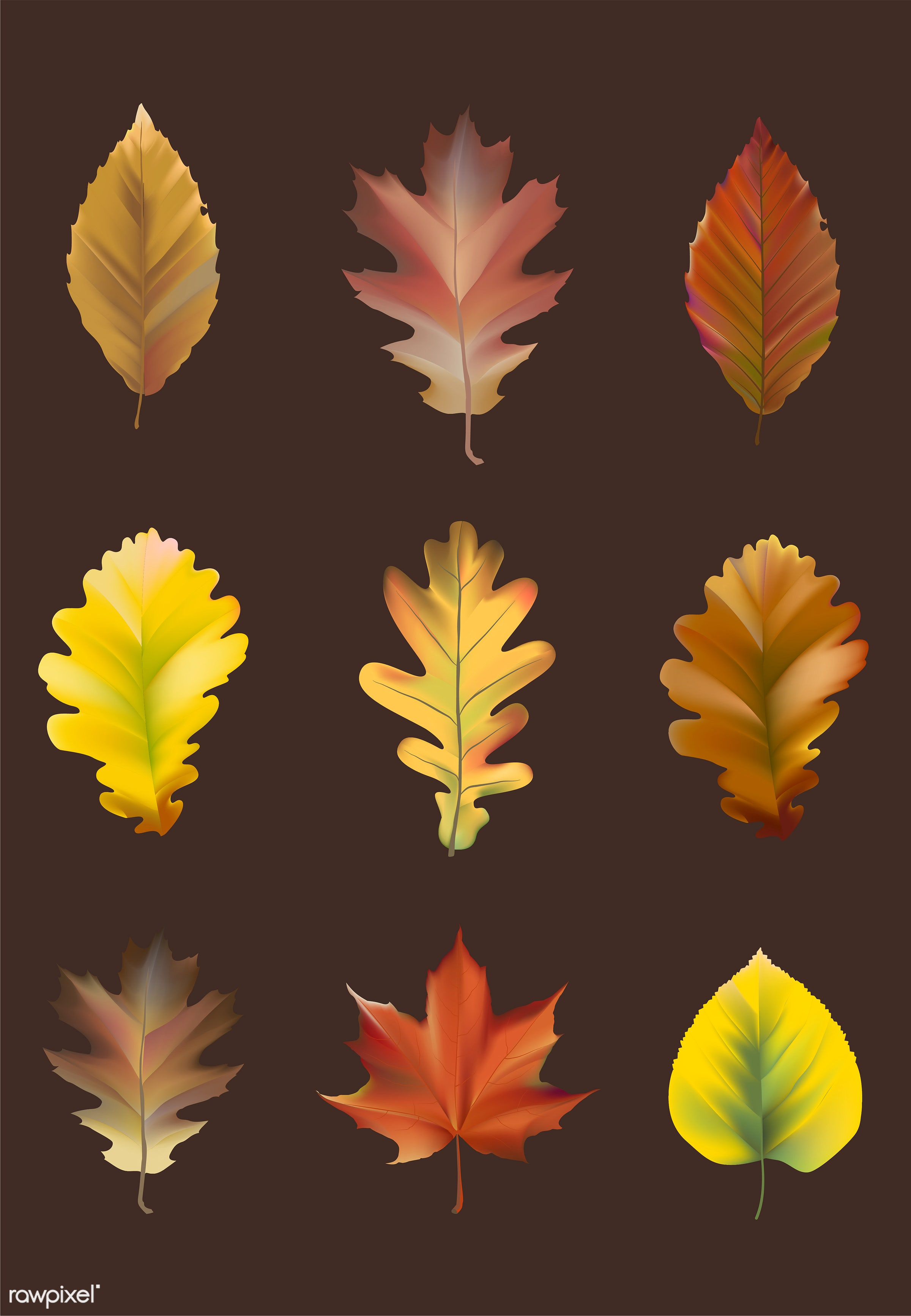 Collection of autumn leaves vector - collection, set, orange, yellow, brown, decomposing, decorative, decorations, maple,...