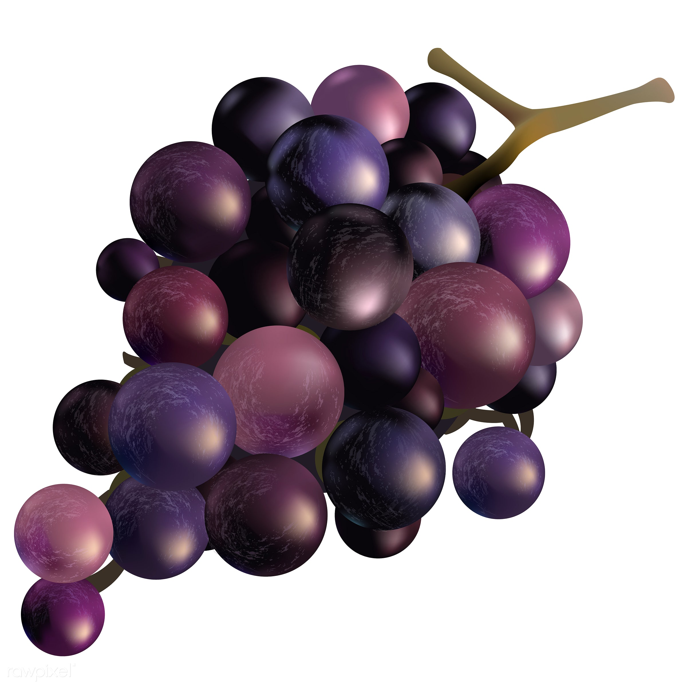Illustration of grapes isolated on white background - fruit, autumn, celebration, crops, elements, fall, festival, grapes,...