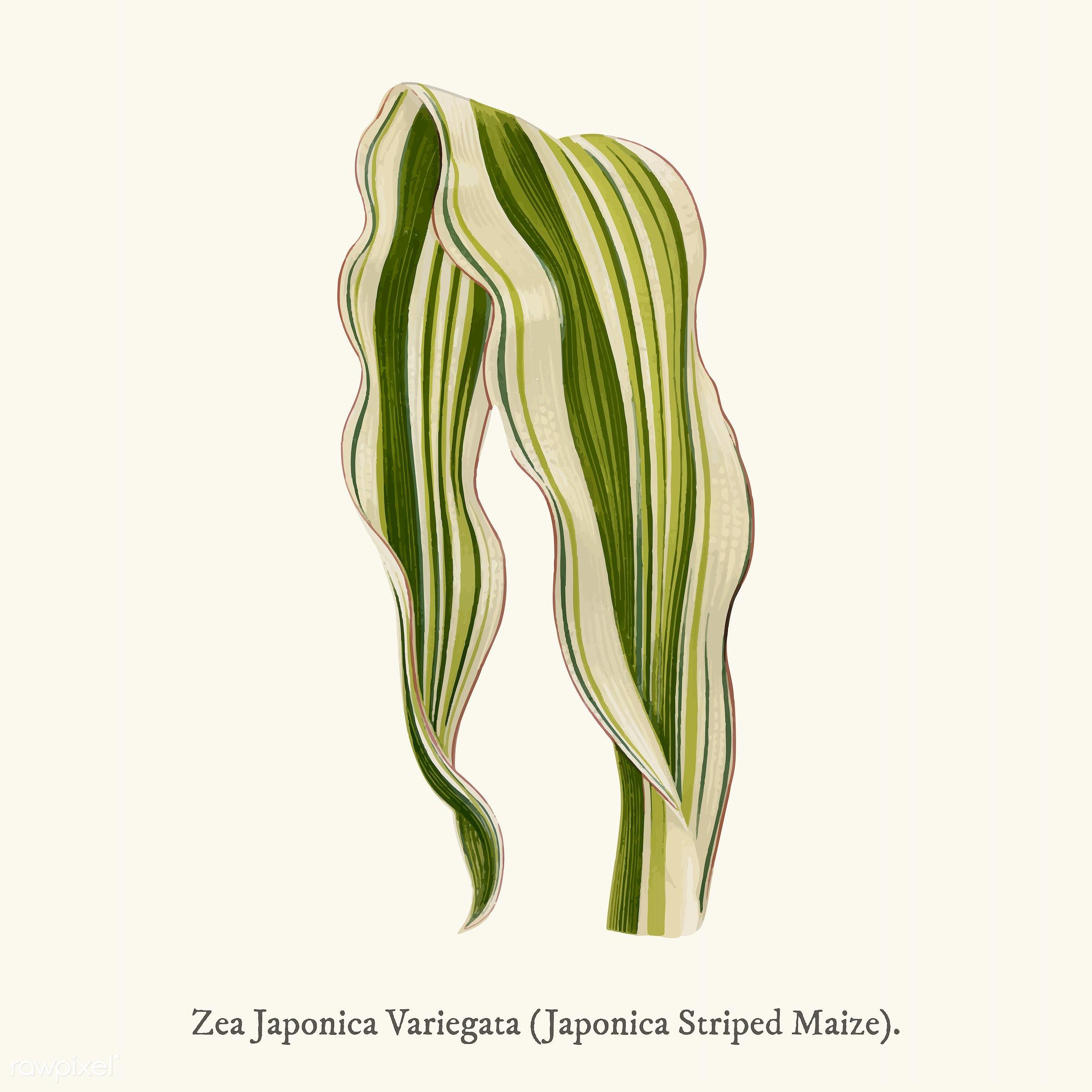 ancient, antique, decorate, decoration, design, drawing, graphic, illustration, japonica, leaf, leaves, nature, pattern,...