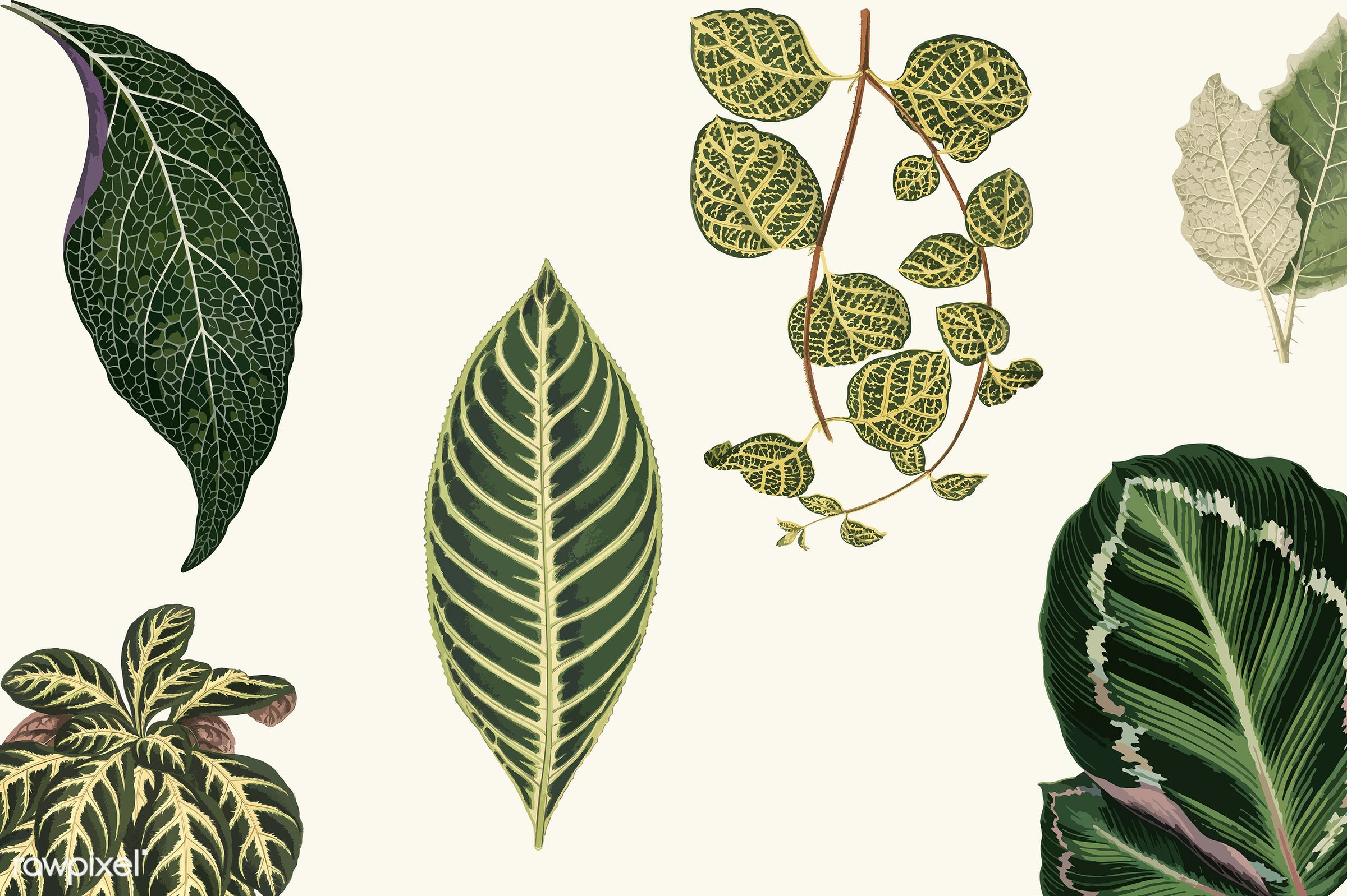 leaf, antique, collection, decorate, decoration, design, drawing, graphic, illustration, leaves, mixed, nature, old, pattern...