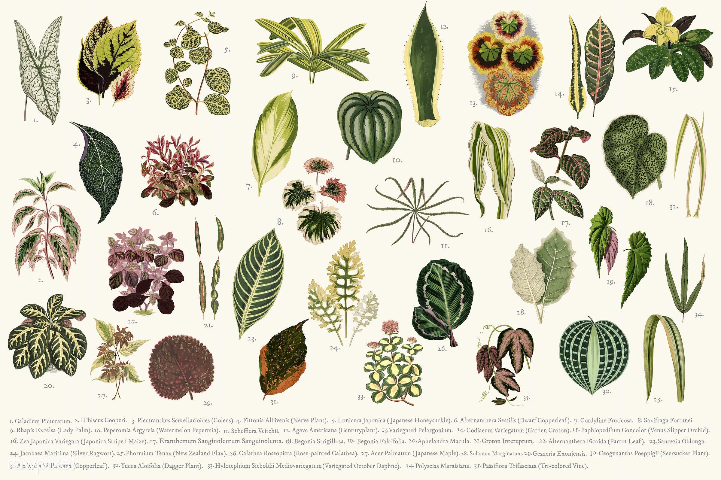 pattern, texture, illustration, vintage, plant, set, tree, begonia, decoration, alternanthera, aphelandra maculata,...