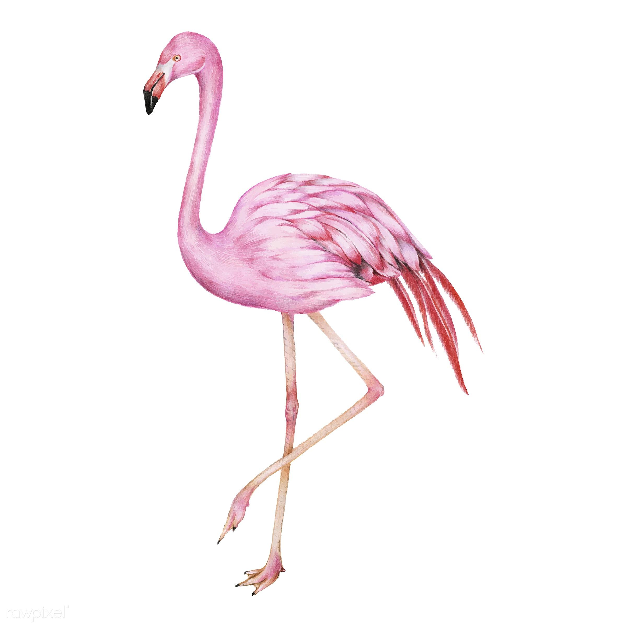 illustration of pink flamingo watercolor style. Black Bedroom Furniture Sets. Home Design Ideas