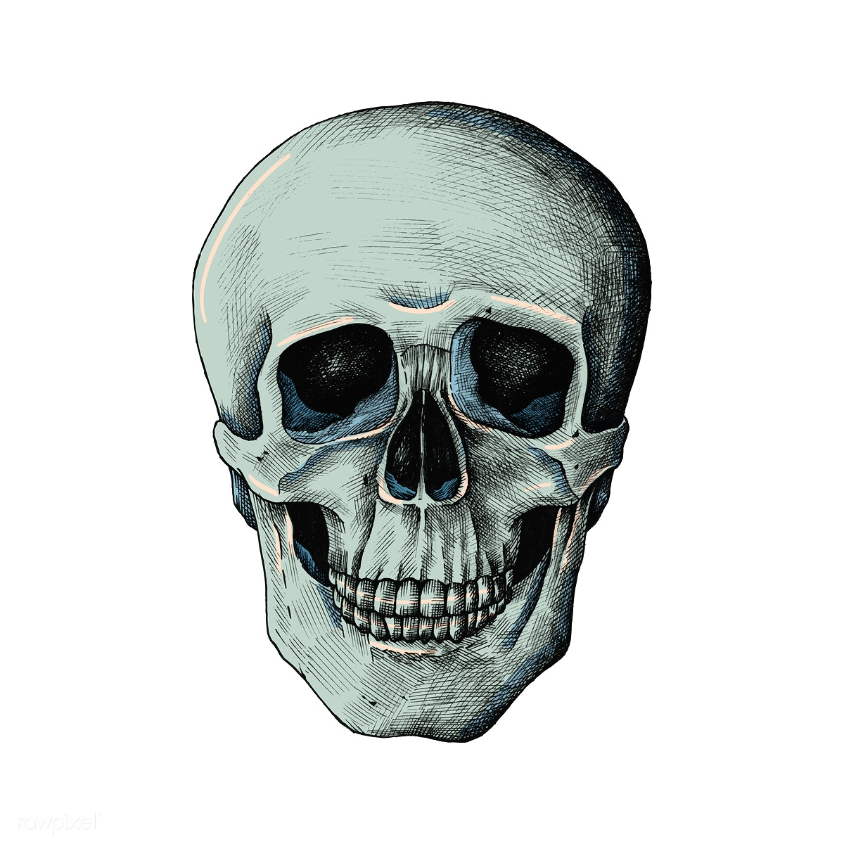 3daece7f682 Hand drawn human skull isolated