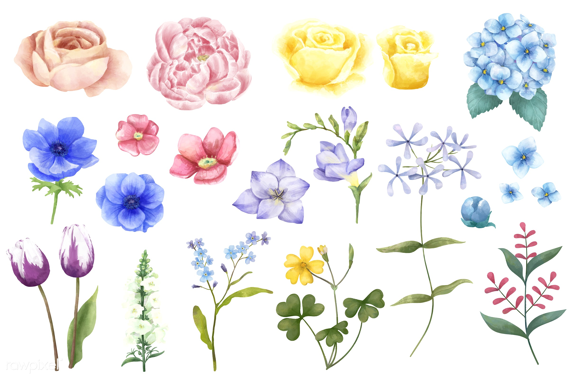 Different Types Of Illustrated Flowers Isolated On White Background