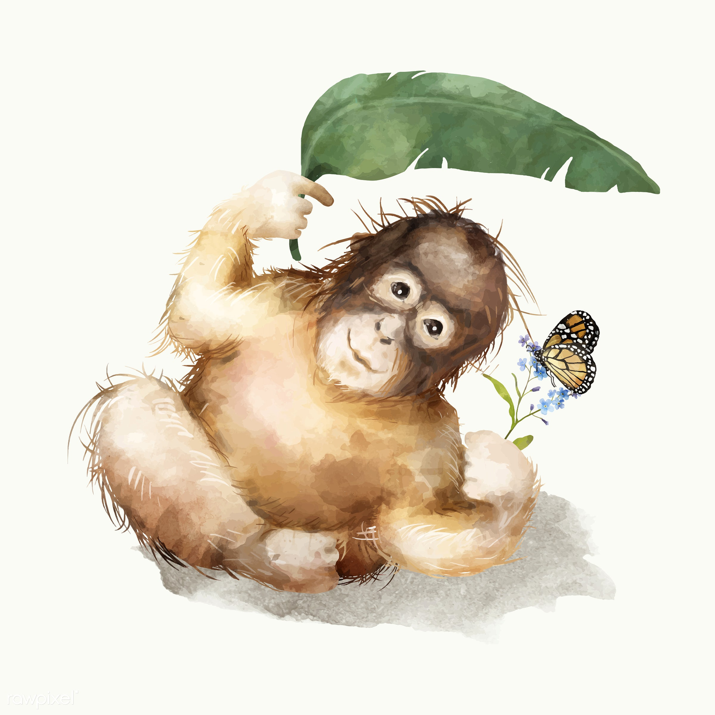 Illustration of a baby chimpanzee - animals, baby, cheerful, child, chimpanzee, color, colored, creature, cute, fun, graphic...