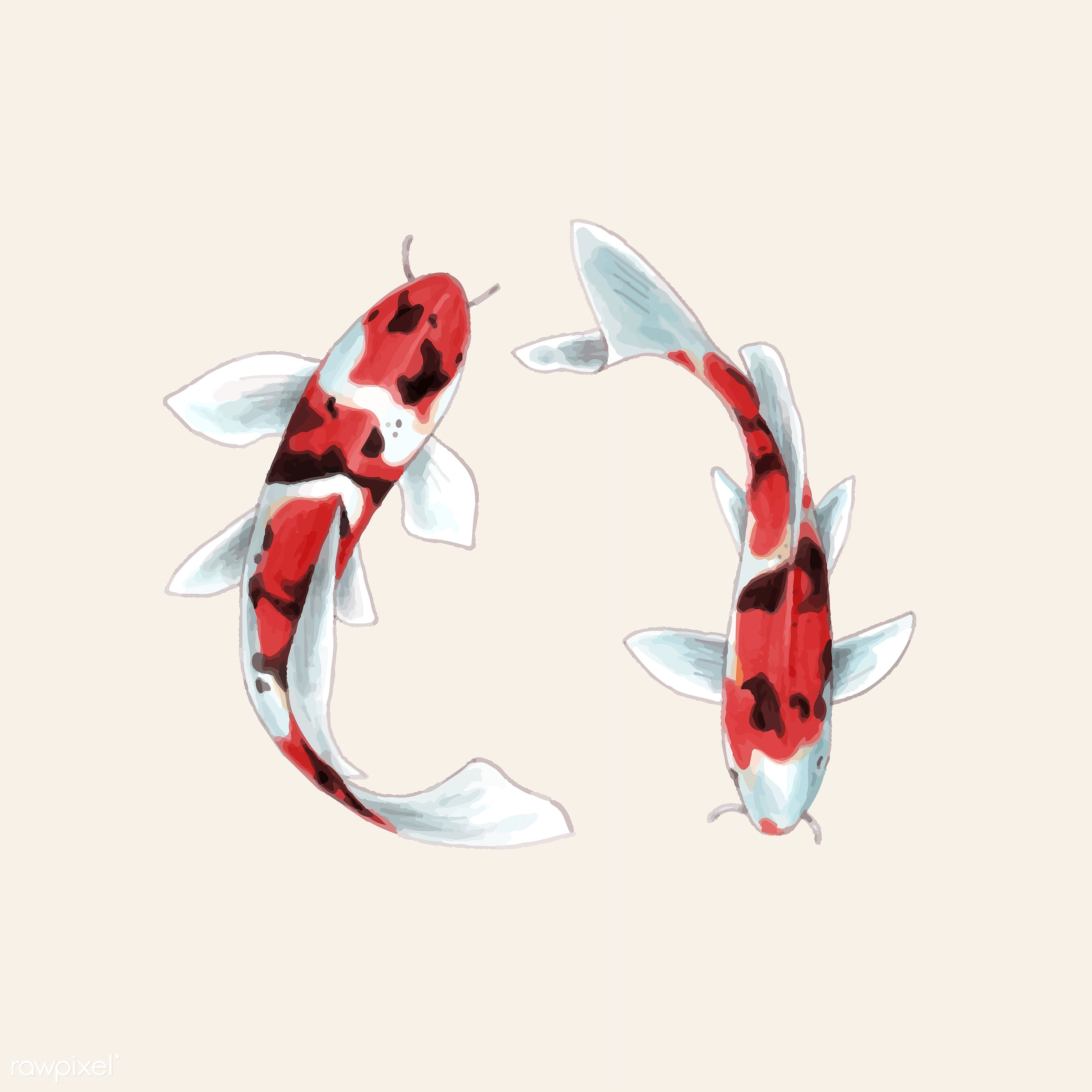 Illustration of Japanese Koi fish - ID: 416976