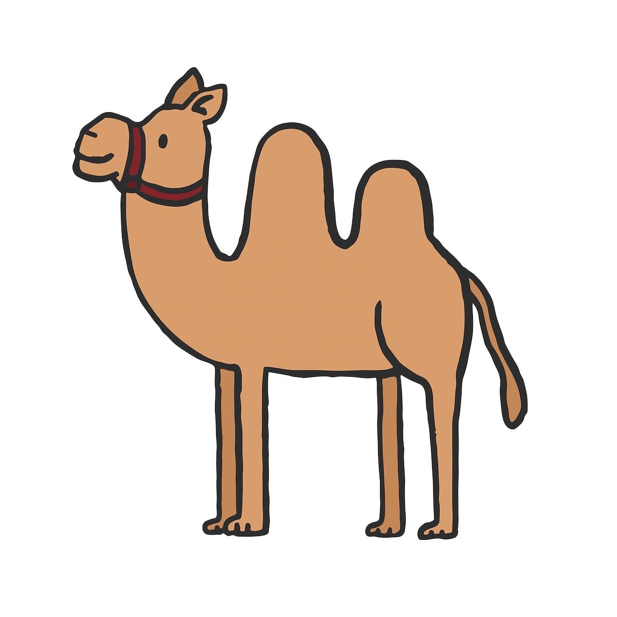 Hand drawn camel illustration