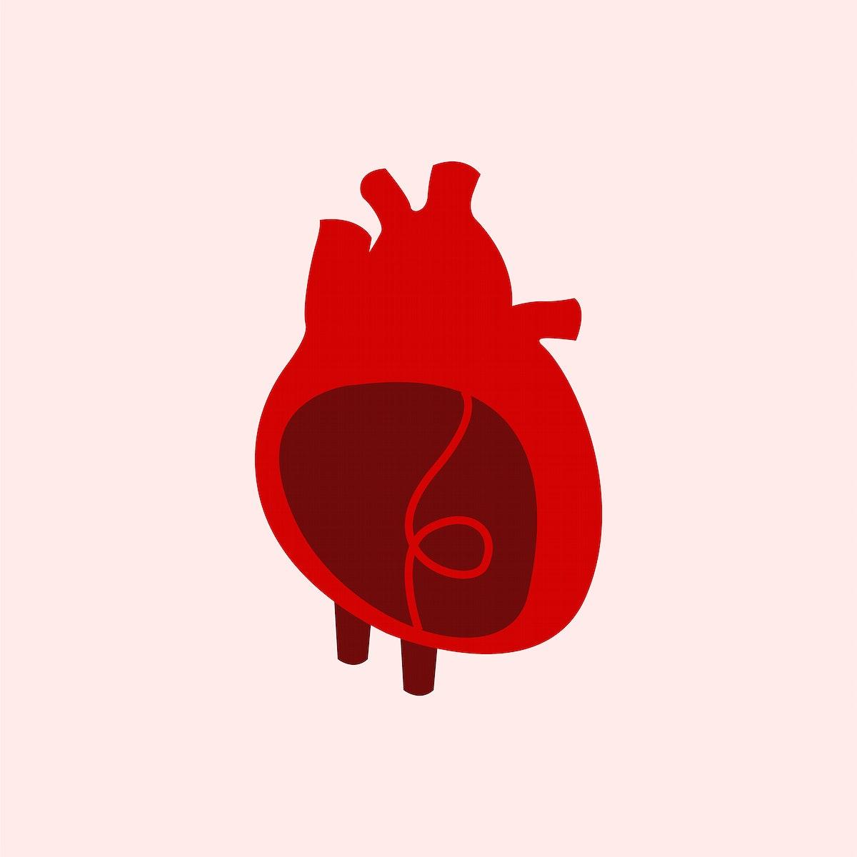 Heart organ isolated vector illustration