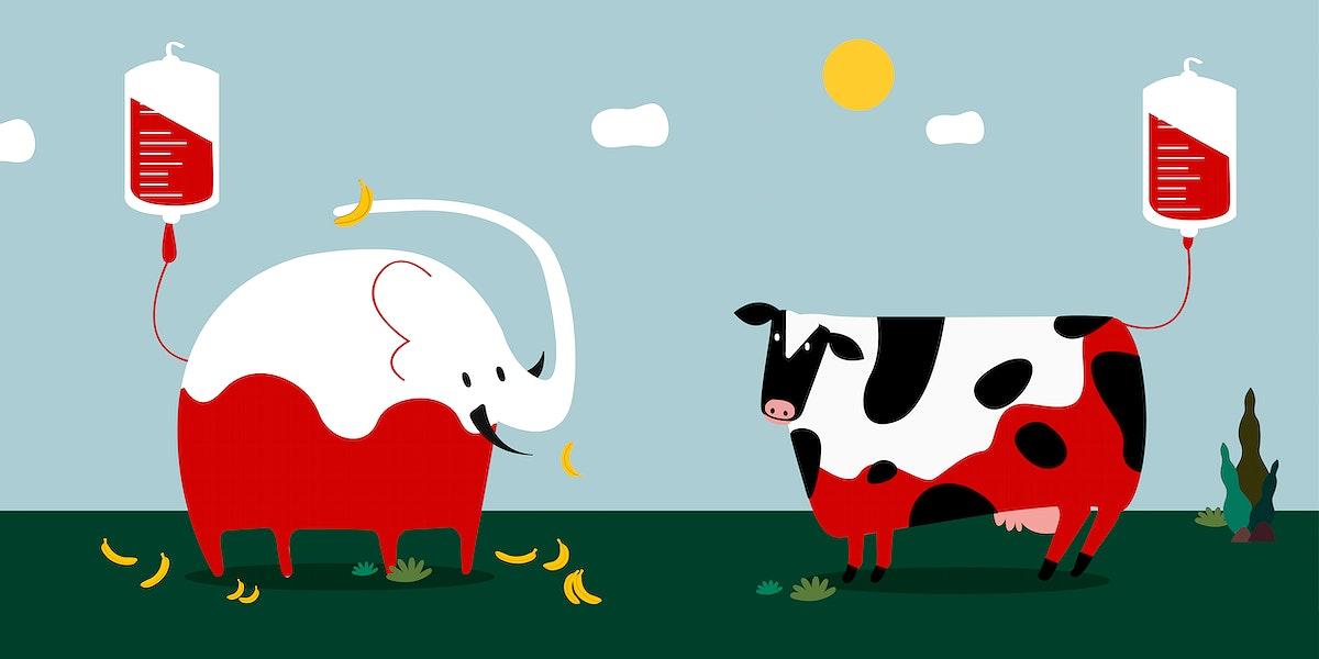 Animal blood donation vector illustration