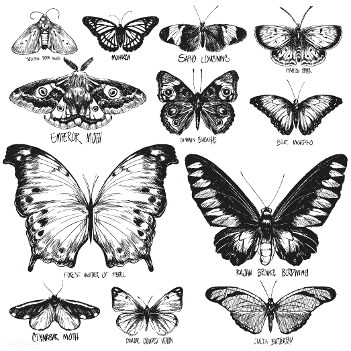 Animal animals butterflies butterfly collection drawing group illustration