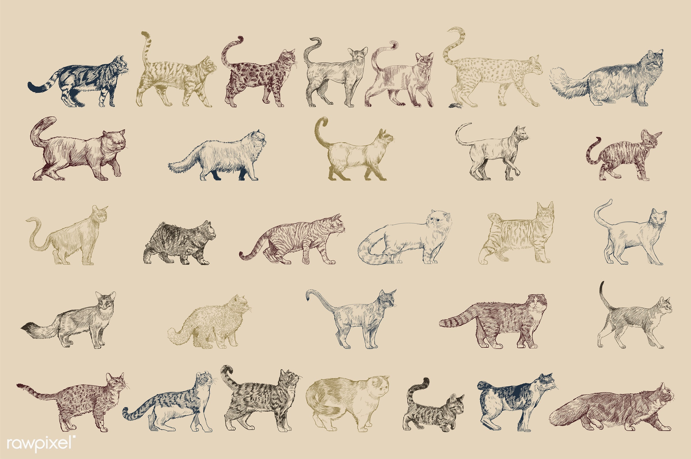 Illustration drawing style of cat breeds collection - animal, animals, breeds, cat, cats, collection, drawing, engraving,...