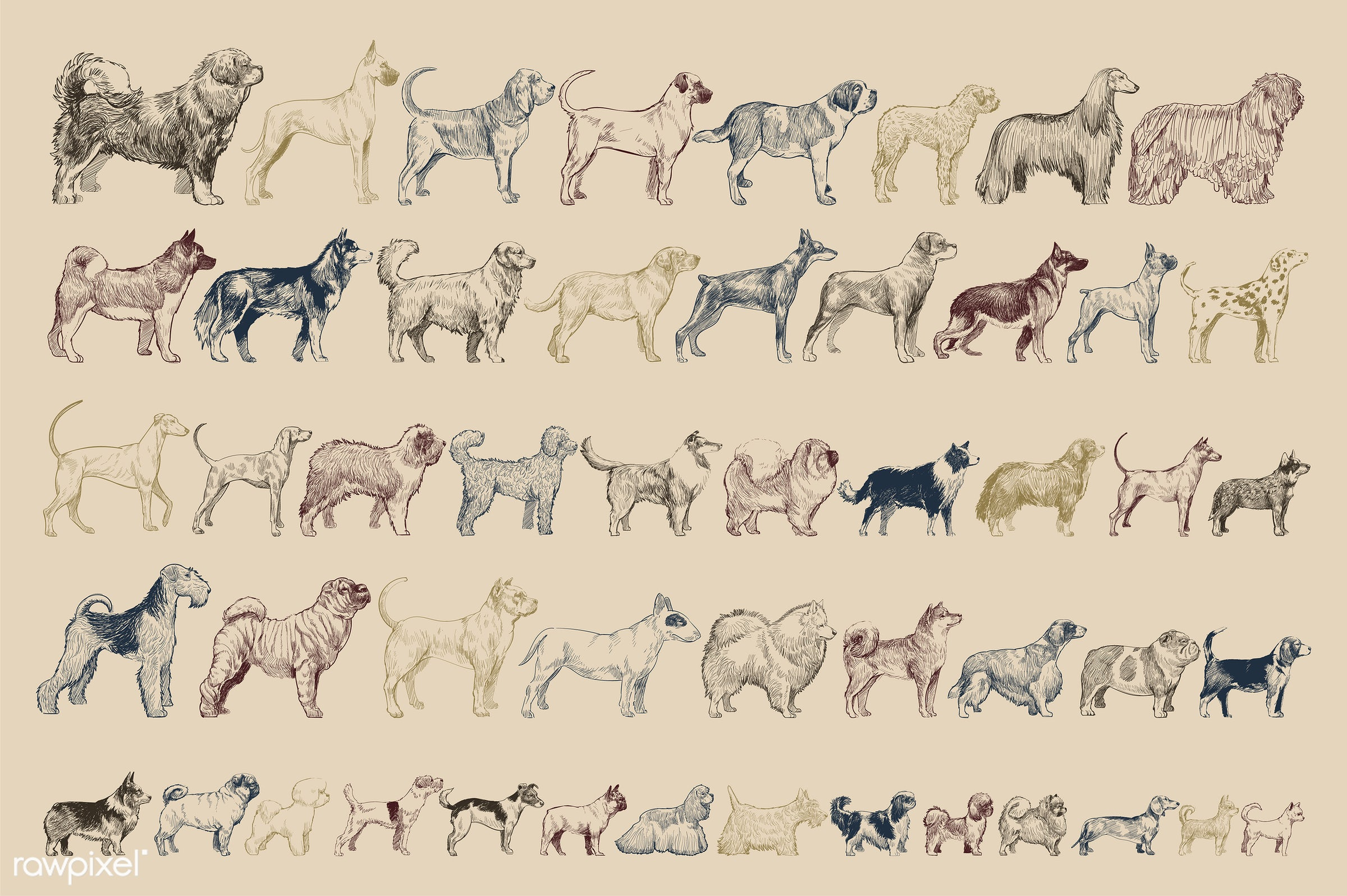 Illustration drawing style of dog - animal, animals, breed, collection, dog, drawing, engraving, illustration, isolated,...