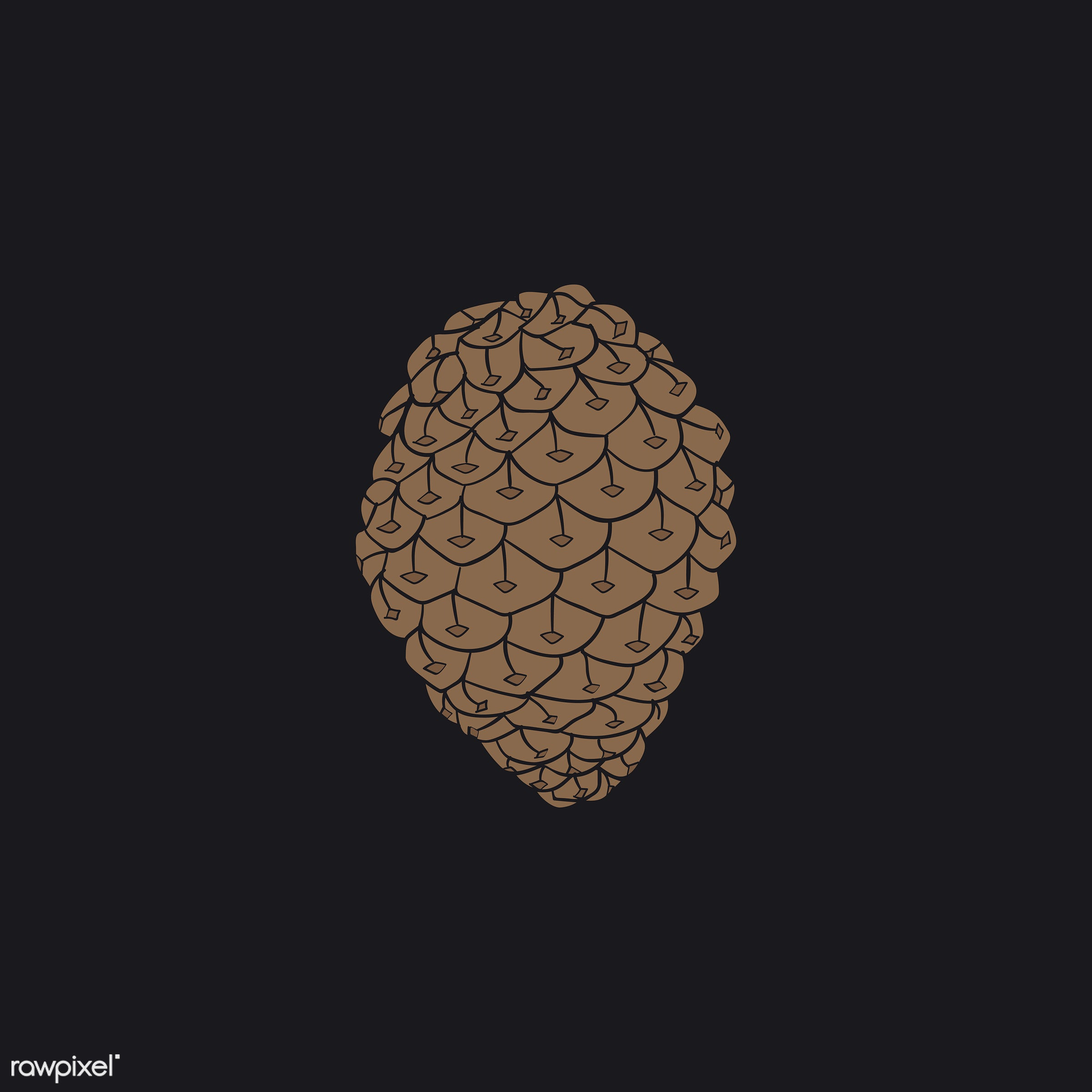 botanical, design, flora, graphic, icon, illustration, isolated, nature, ornaments, plant, vector, pine, pinecones,...