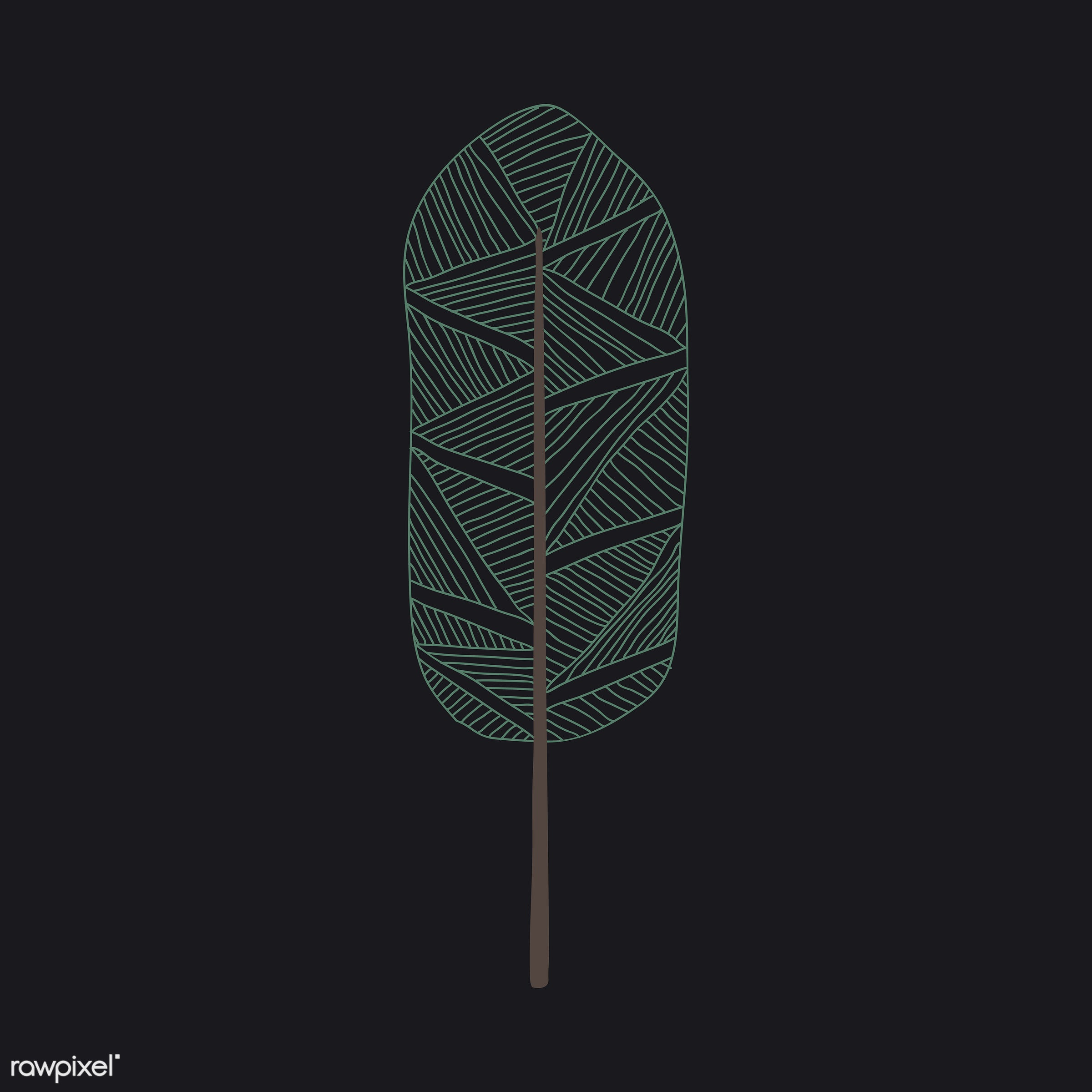 botanical, design, flora, graphic, icon, illustration, isolated, nature, ornaments, plant, tree, vector, leaves, leaf, pines...
