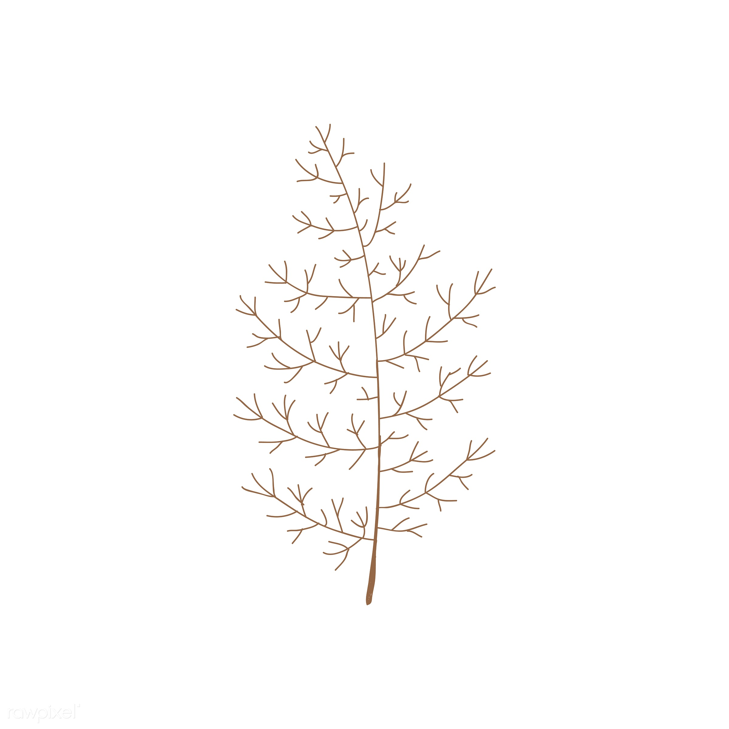 botanical, collection, design, flora, graphic, group, icon, illustration, isolated, leaf, leaves, nature, ornaments, pines,...
