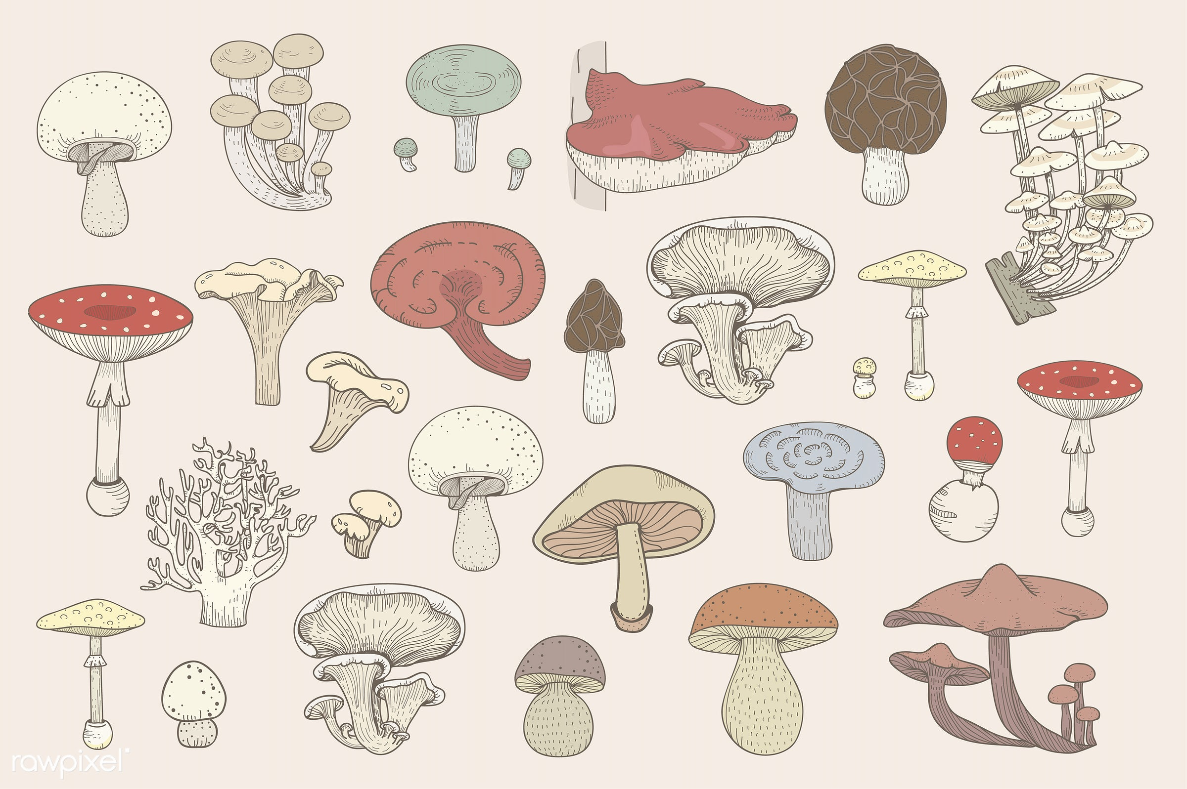 collection, design, doodle, farmers, food, graphic, illustration, isolated, mushrooms, organic, set, vector, vegan,...