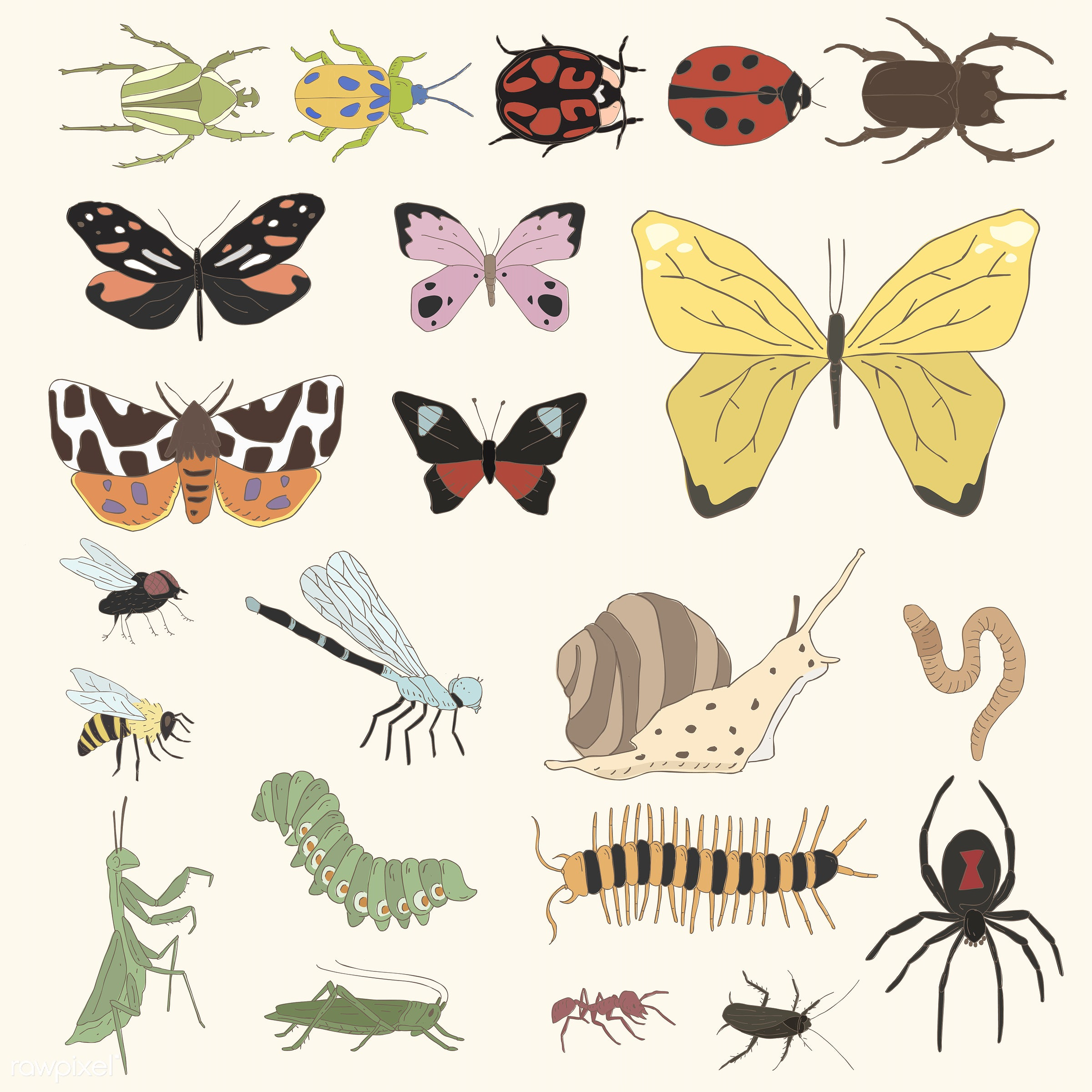 Vector of different kinds of insects - cartoon, doodle, drawing, icon, illustration, insects, nature, sketch, vector, extra...