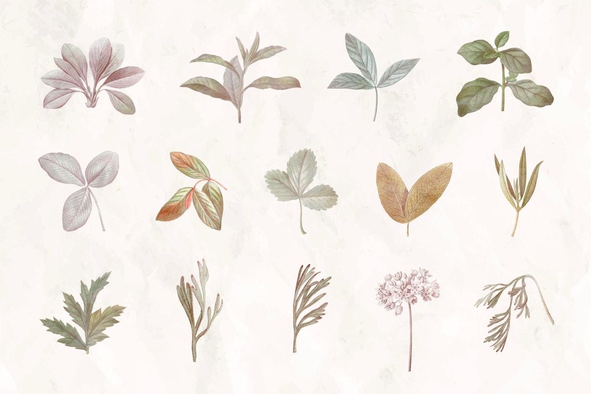 Foliage design elements vector set