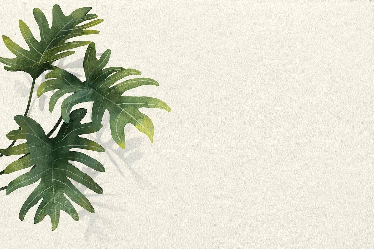 Philodendron radiatum leaf pattern on beige background vector