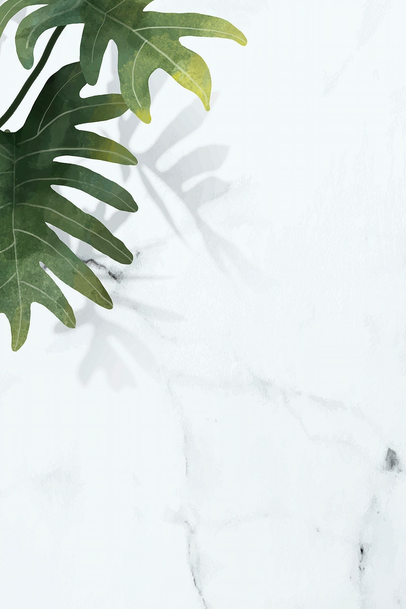 Philodendron radiatum leaf pattern on white marble background vector