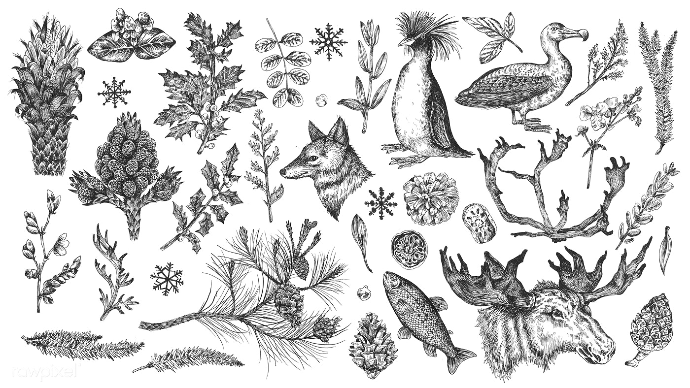 download premium illustration of animal drawing collection in grayscale