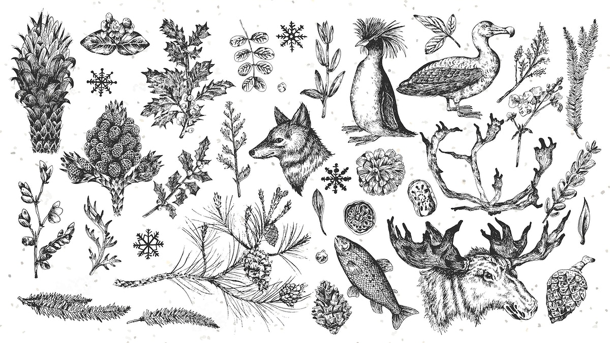 Animal drawing wallpaper collection vector